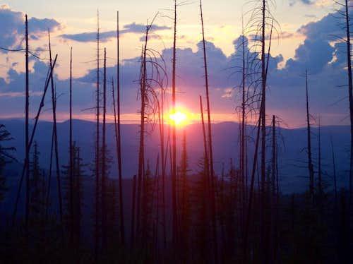 Sunset Thru Fire Snags