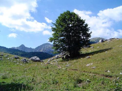 A bautiful tree near Lago...