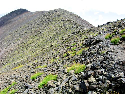 San Francisco Peaks Alpine Information: San Francisco Peaks Groundsel Vs. Alpine Avens