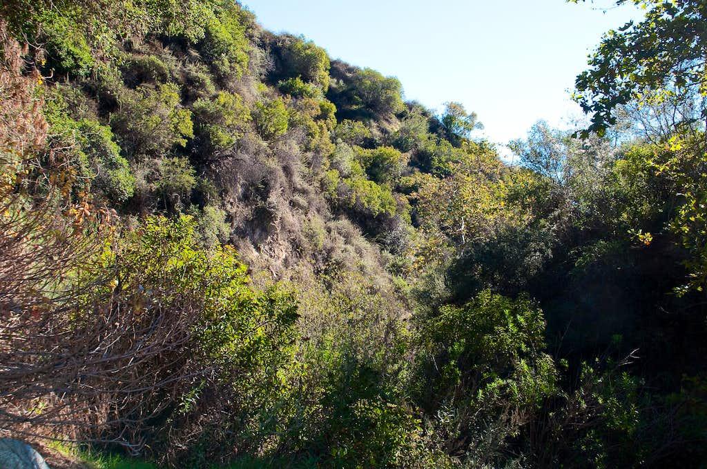 Bailey Canyon