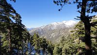 Mt Baldy from Northface of Bighorn Peak