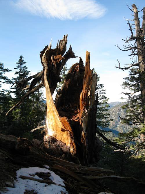 Dawson Saddle trail