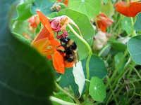 Picking wild bee pollen.
