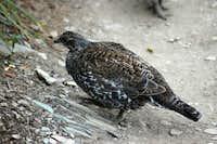 Bird on Garden Wall Trail