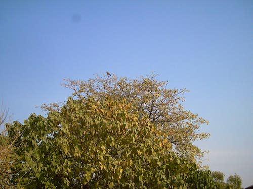 Start of Winter Season in Islamabad