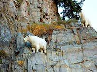 Hike timp from Aspen...