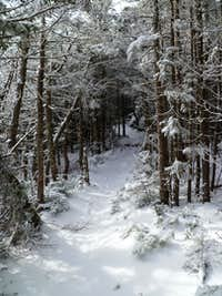 Ahhh the bliss of a winter trail