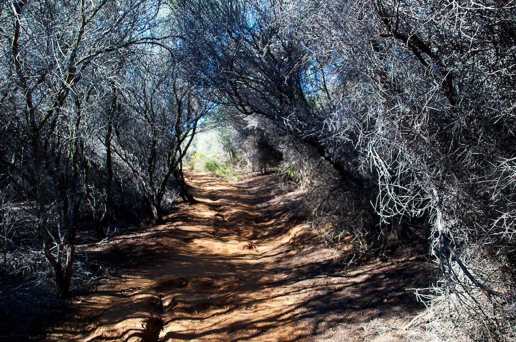 Temescal Ridge trail