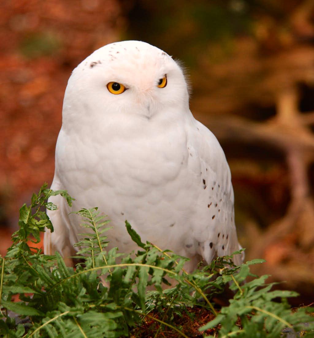 Animal Close-Ups