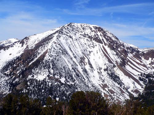 Tioga Peak from the east