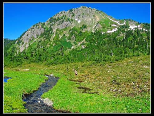 Meadows below Heart Lake