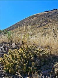 Painted Hills Cactus