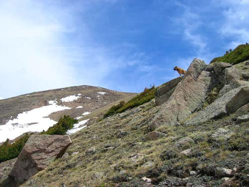 On route to Vasquez Peak's...