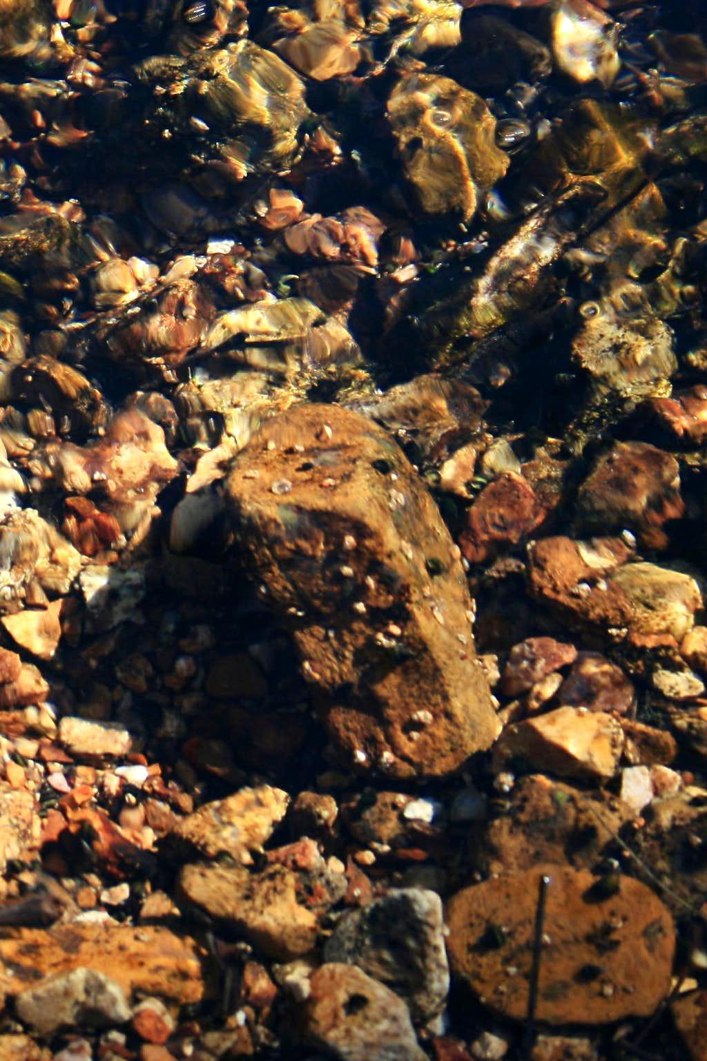 Ozark Mussels