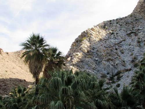 49 Palms