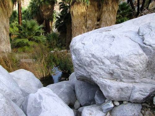 Water at 49 Palms Oasis