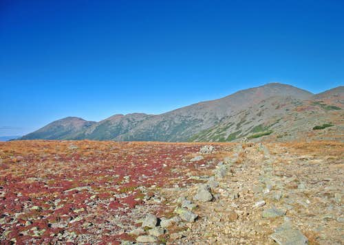 Central Presidentials