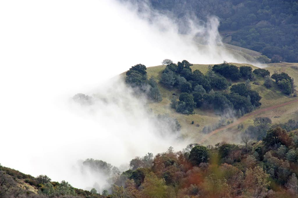 Fog play on Mt. Diablo south slopes