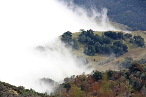 Fog play on Mt. Diablo south slopes