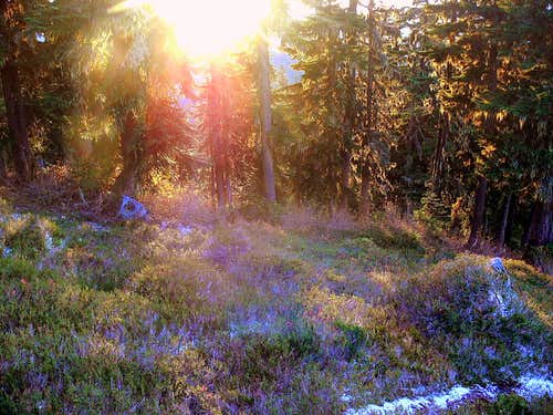 Alpine Meadow During Sunset