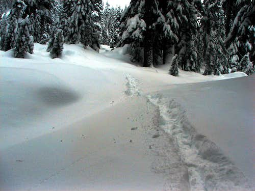 The Winter Tracks
