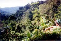 View over the rainforest.