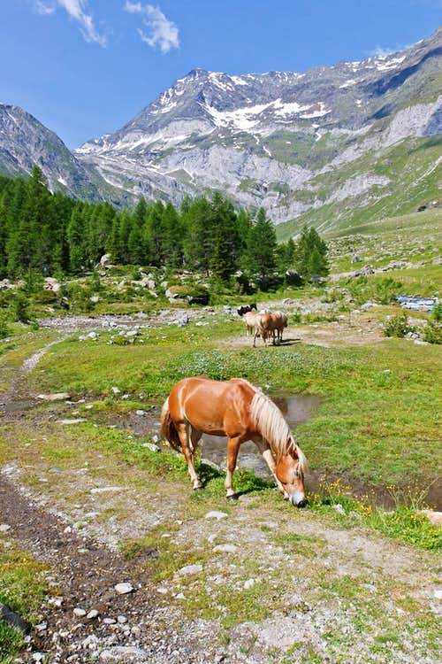 Pastures in Pfelder Tal