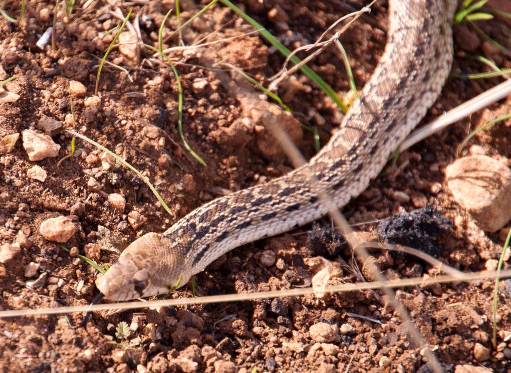 Snake Encounter
