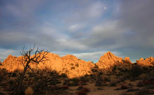 Moonrise Over Joshua Tree