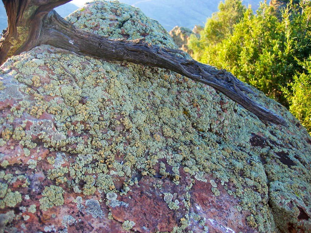 Serious lichen