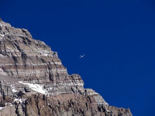 Daring aviators