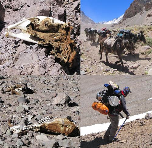 The heroes of Aconcagua