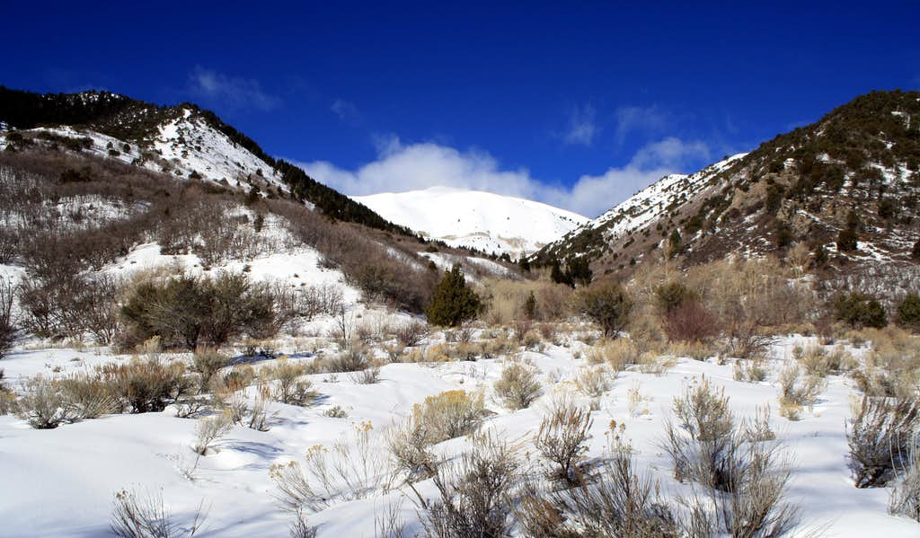 Sharp Mountain from Serviceberry Canyon