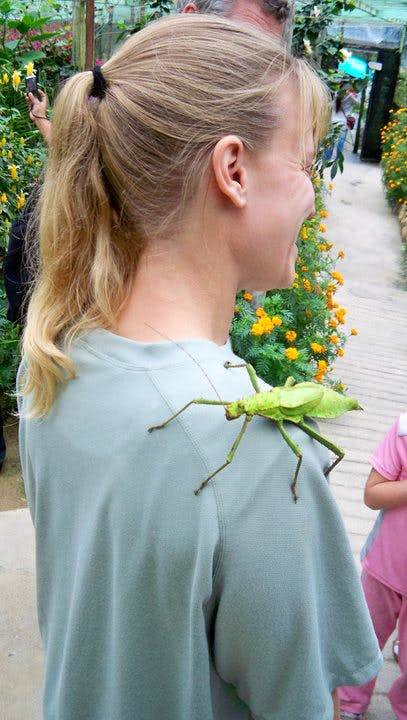 Giant Insect