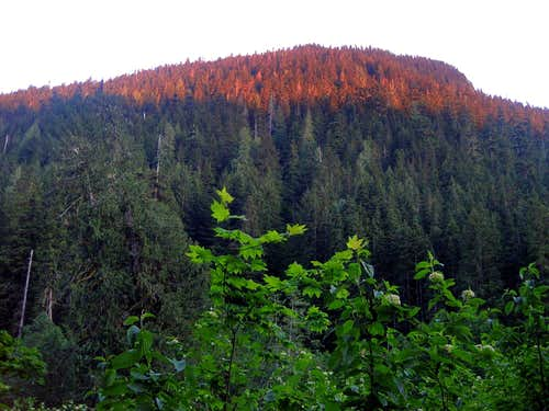 Alpenglow in the woods