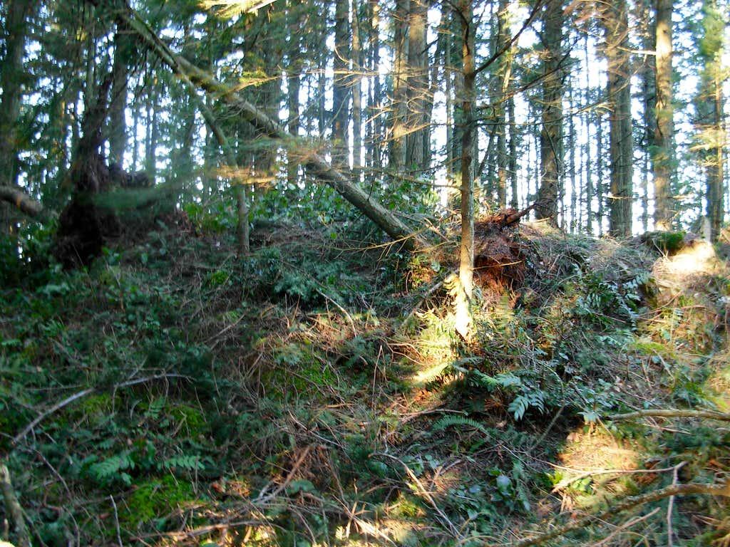 Lummi Point Summit Area
