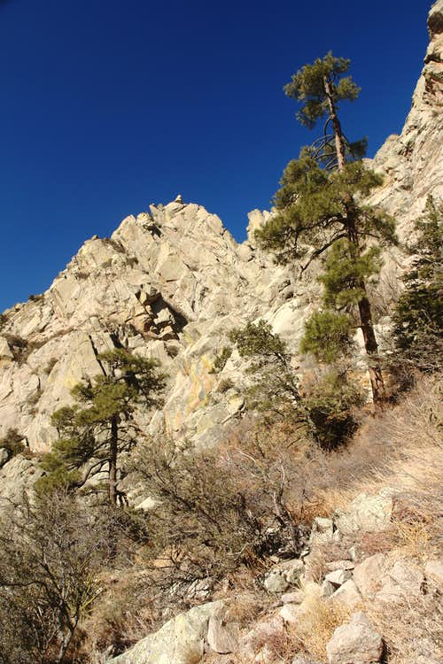 Two Ponderosa pines on the approach to normal route