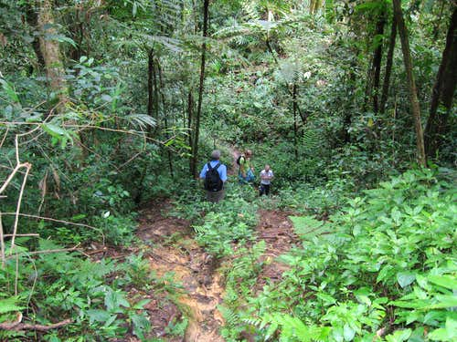 Jungle Trail #8