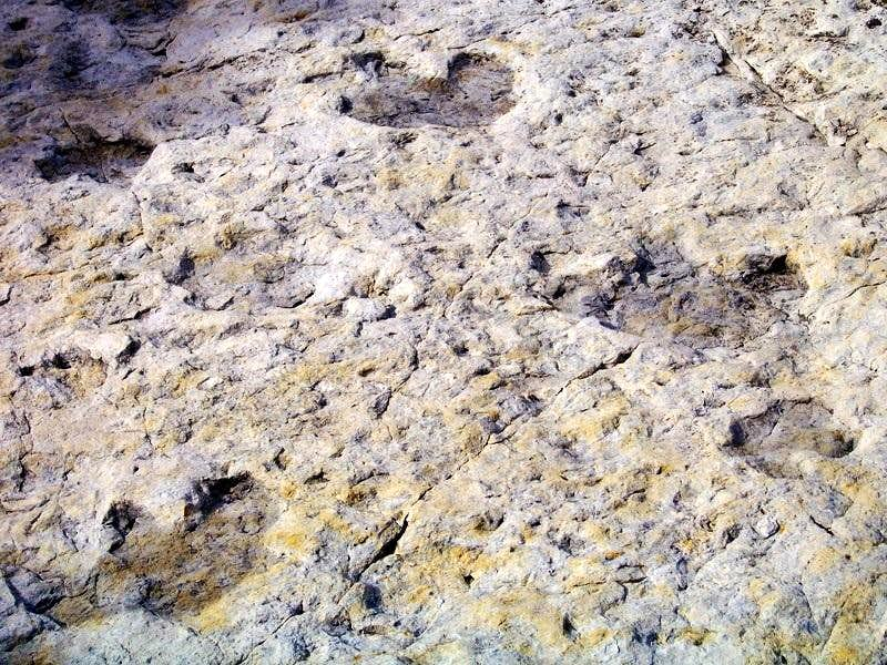 Dinosaur Tracks (3)