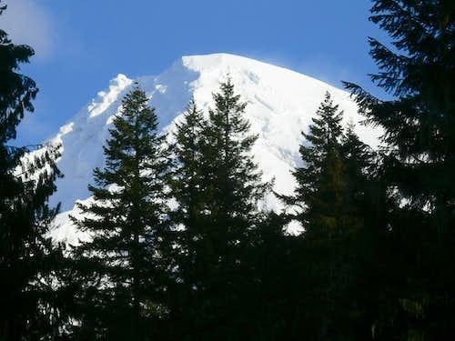 Mount Rainier through the Trees