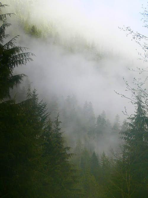 Misty Woods on Mount Baker