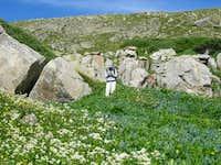 Holy Cross Wildflowers