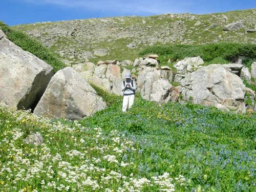 Holy Cross Wildflowers