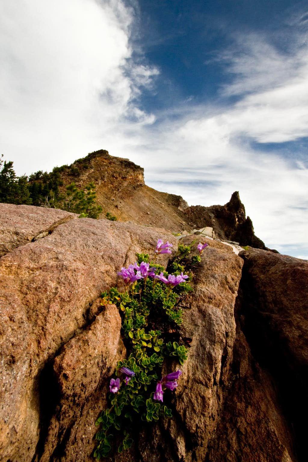 Flowers Below Hillman's Summit