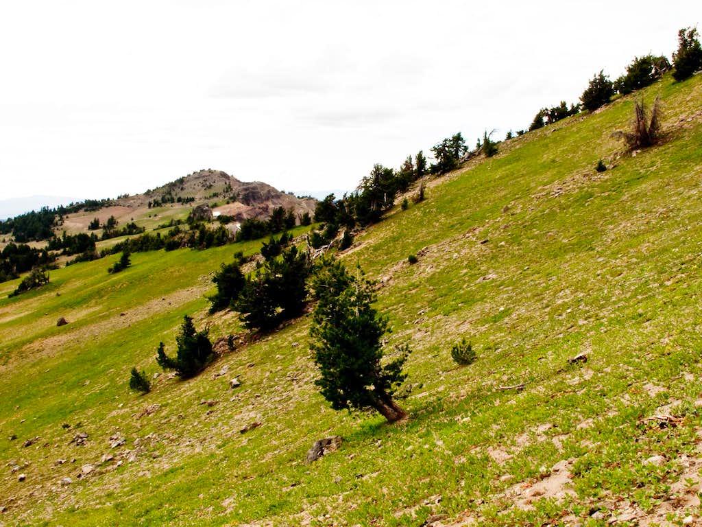 Meadows Between Applegate & Garfield