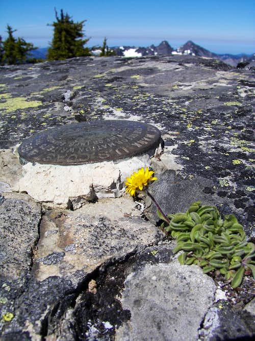 Snoqualmie Mtn summit
