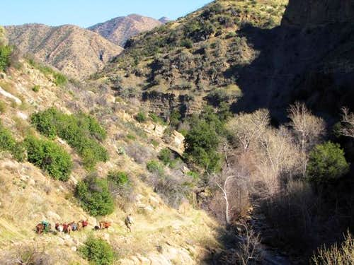 Pack goats on the trail
