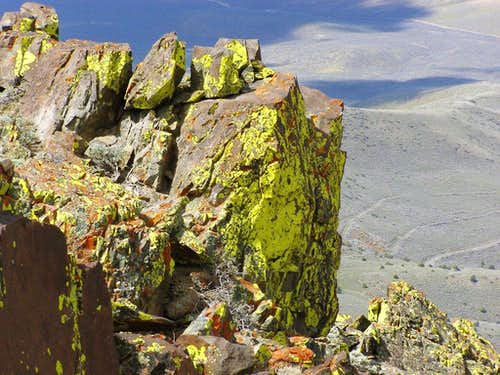 Lichens at the Jackson Mtns summit