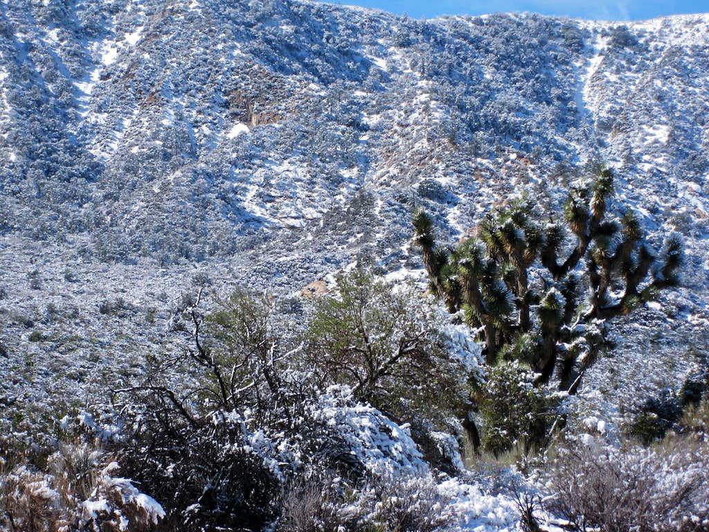 Mojave Desert in White