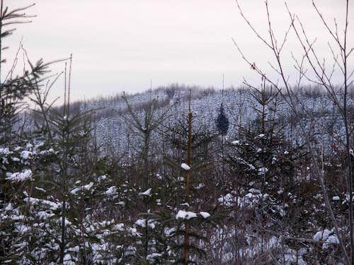 Taylor Mountain